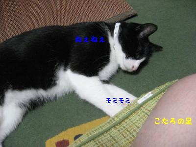 IMG_9429.jpg