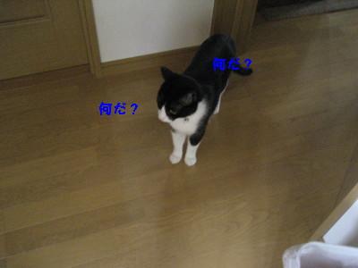 IMG_9629.jpg