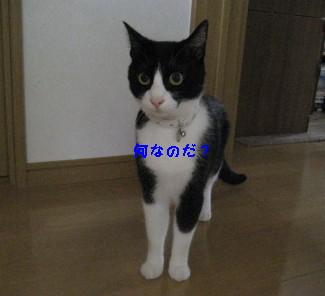 IMG_9631_20100914090543.jpg
