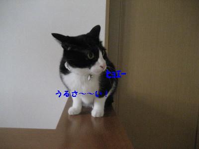 IMG_9635.jpg