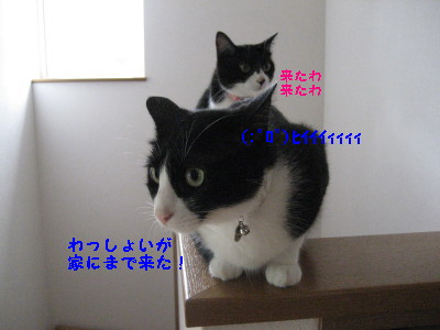 IMG_9655_20100914090608.jpg