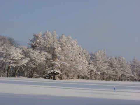 大雪すずめ 023