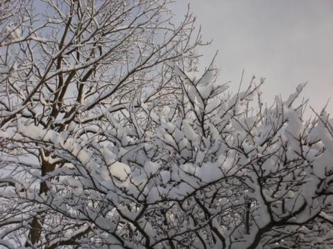 大雪すずめ 001