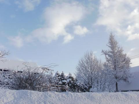 大雪すずめ 048