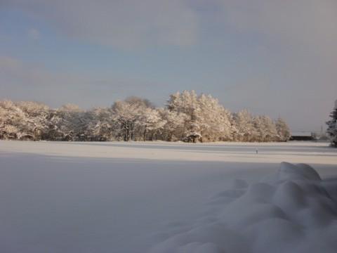 大雪すずめ 026