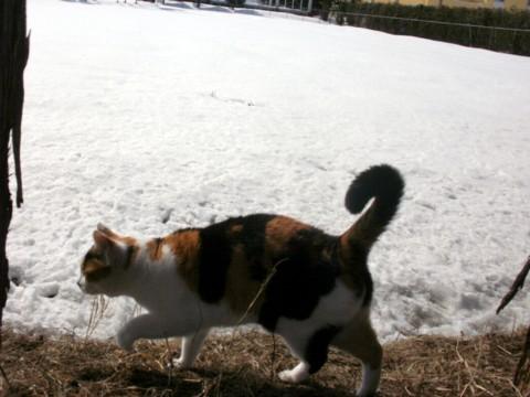 ざわ新雪 028