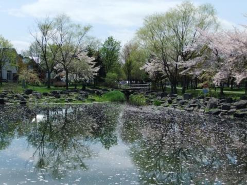 桜公園 234