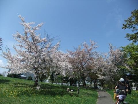 桜公園 219