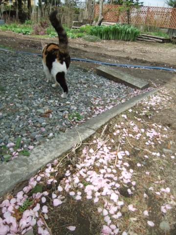 桜公園 001