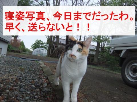 コンちゃん 008