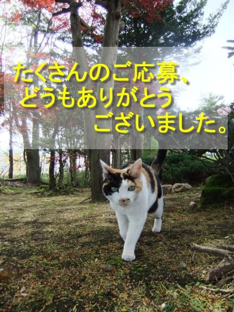 八重桜 022