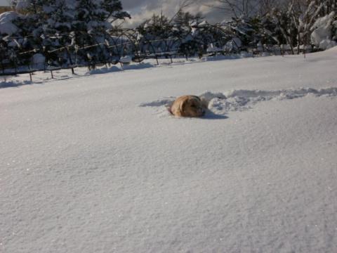 名物雪風呂2