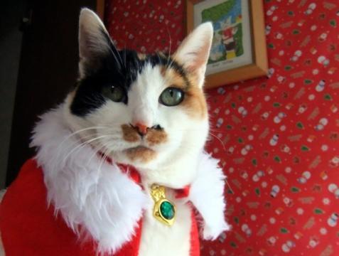 はなざわクリスマス