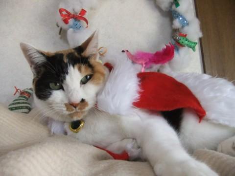 クリスマス準備 136