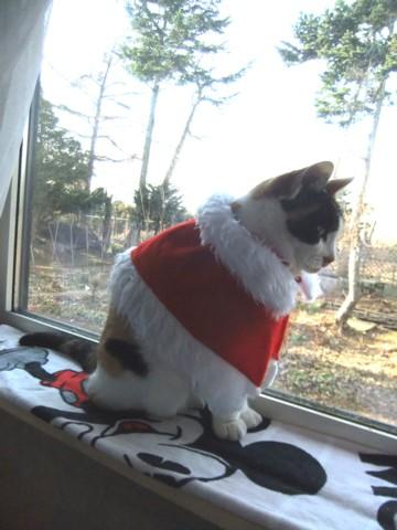 クリスマス準備 128