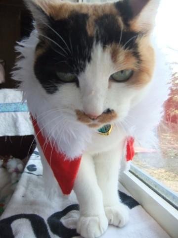 クリスマス準備 131