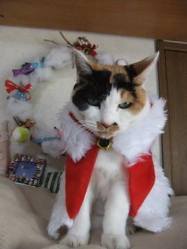 クリスマス準備 118