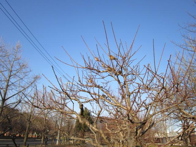 スズメの生る木その1♪