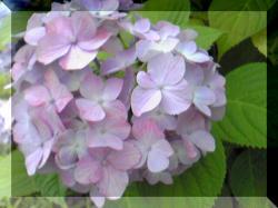 Image205_convert_20100629205833.jpg
