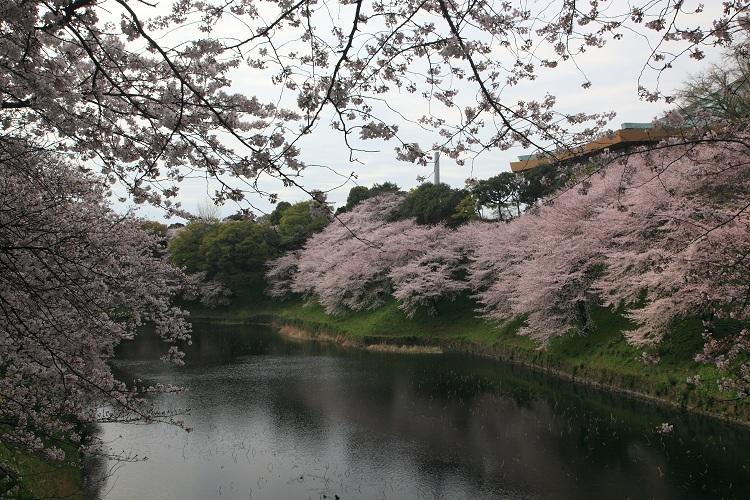 chidorigafuchi_0003f.jpg