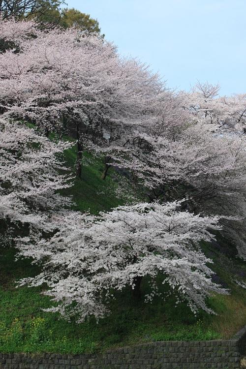 chidorigafuchi_0019f.jpg