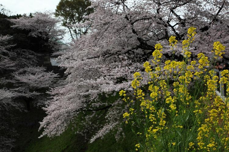 chidorigafuchi_0037f.jpg