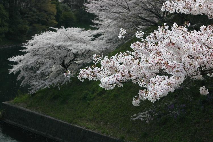 chidorigafuchi_0042f.jpg