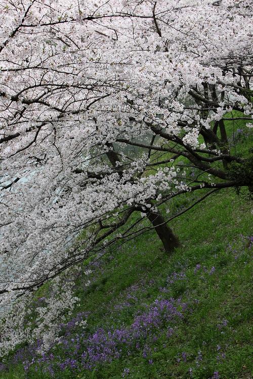 chidorigafuchi_0043f.jpg