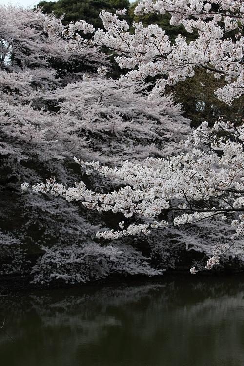 chidorigafuchi_0044f.jpg