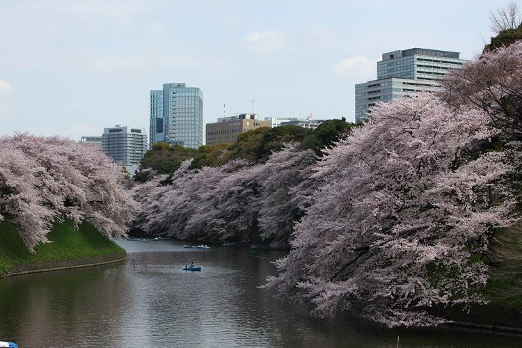chidorigafuchi_0050f.jpg
