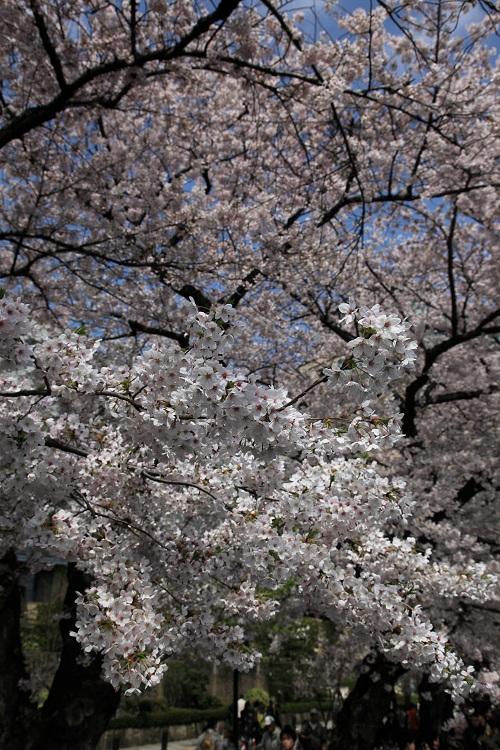 chidorigafuchi_0057f.jpg