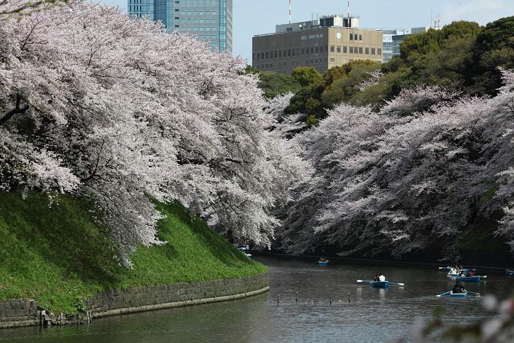 chidorigafuchi_0064f.jpg