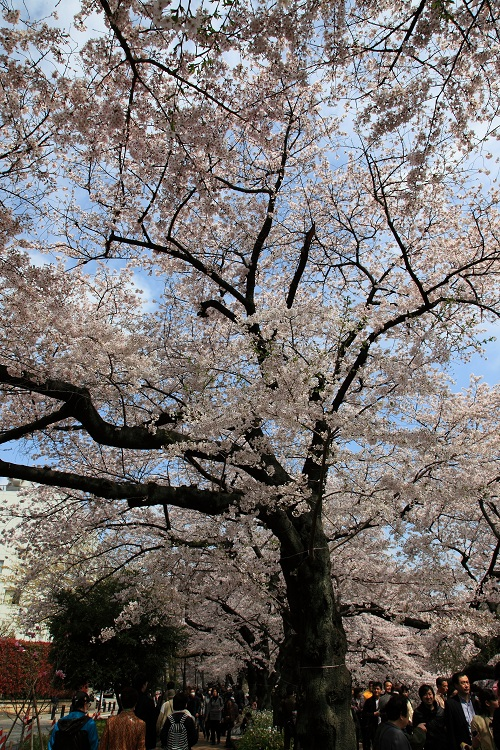 chidorigafuchi_0067f.jpg