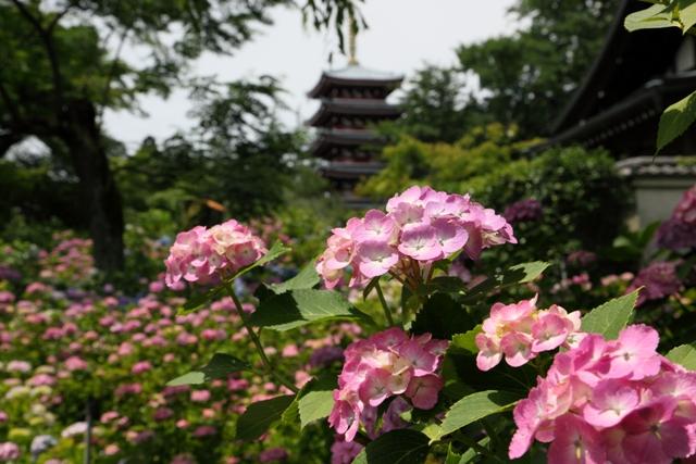 hondoji_0007fu.jpg