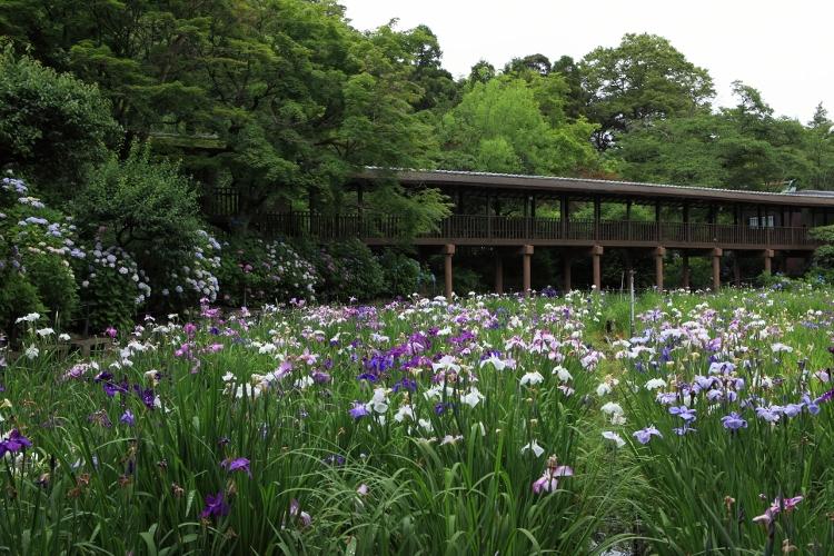 hondoji_0031f.jpg