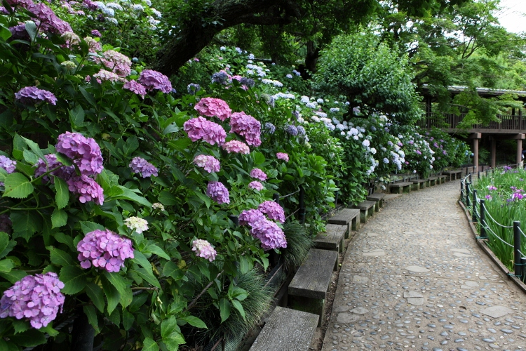 hondoji_0032f.jpg