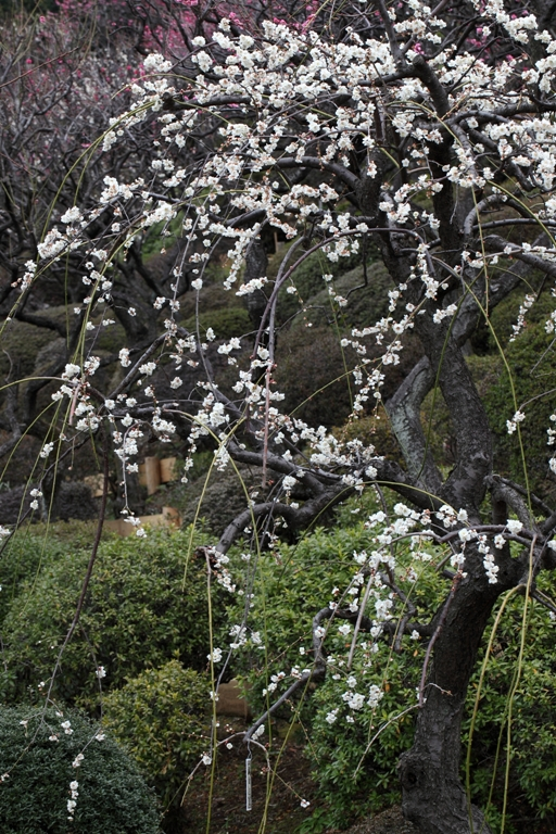 ikegami-baien_0003f.jpg