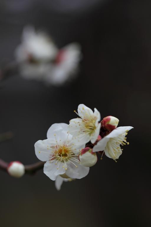 ikegami-baien_0008f.jpg