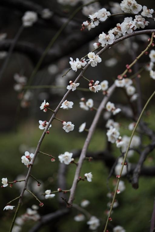 ikegami-baien_0018f.jpg
