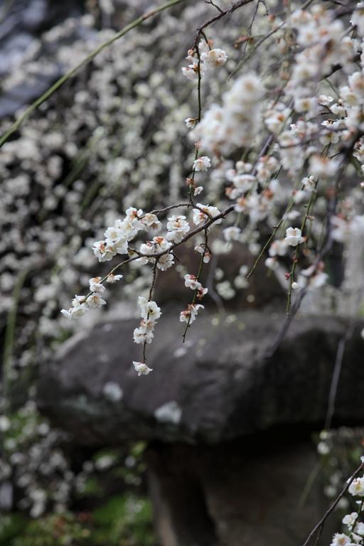 ikegami-baien_0021f.jpg
