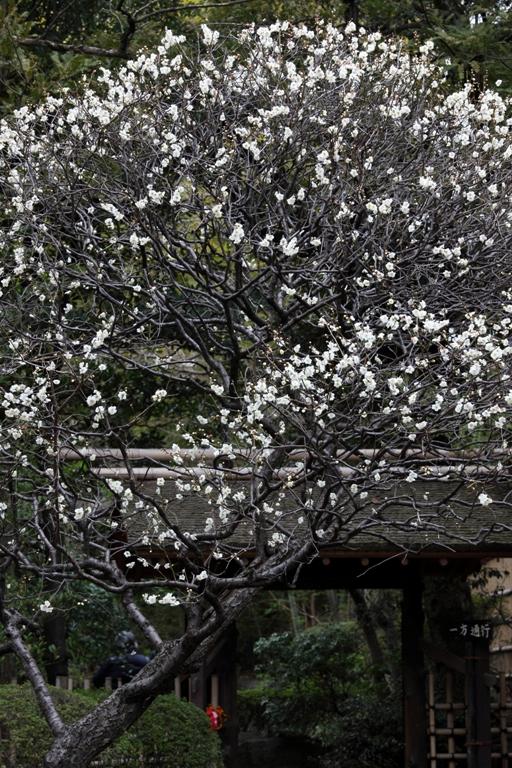 ikegami-baien_0024f.jpg
