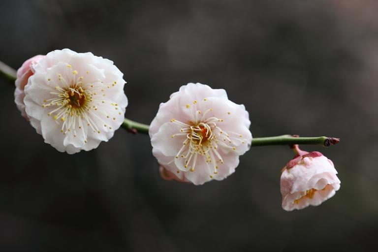 ikegami-baien_0028f.jpg