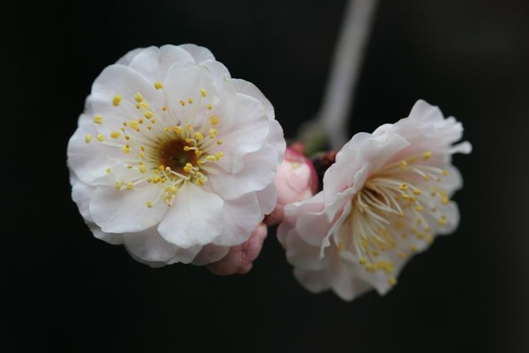 ikegami-baien_0029f.jpg
