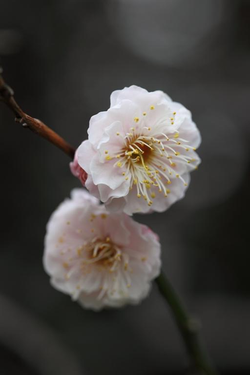 ikegami-baien_0031f.jpg