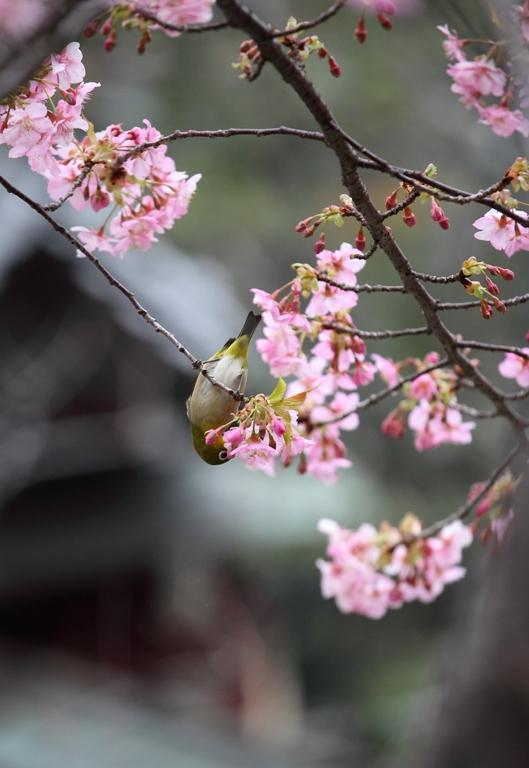 ikegami-baien_0037f.jpg