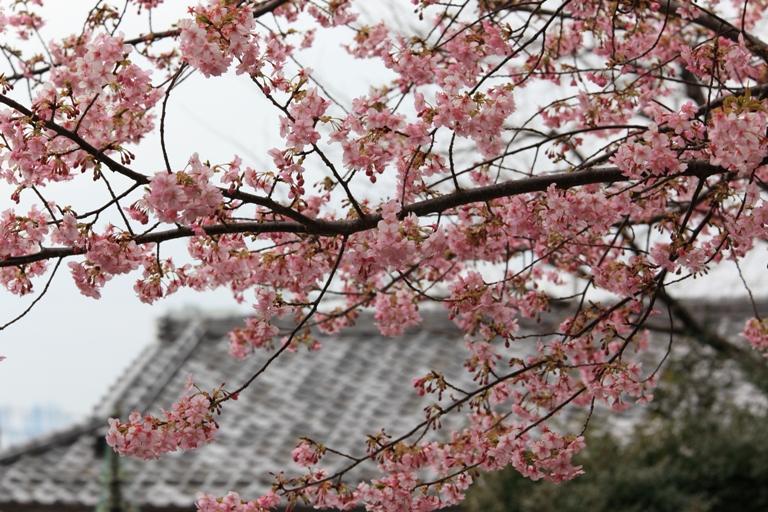 ikegami-baien_0043f.jpg