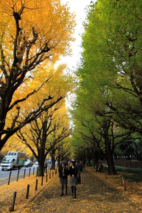jingu-icho_0014fu.jpg