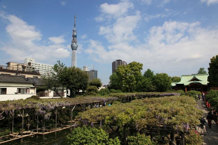 kameio-fuji_0024f.jpg