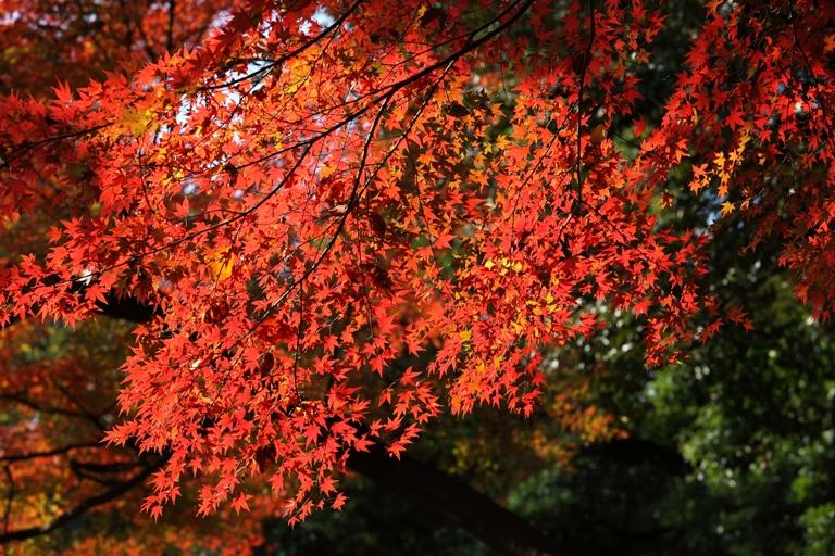 koishikawa_0009fu.jpg