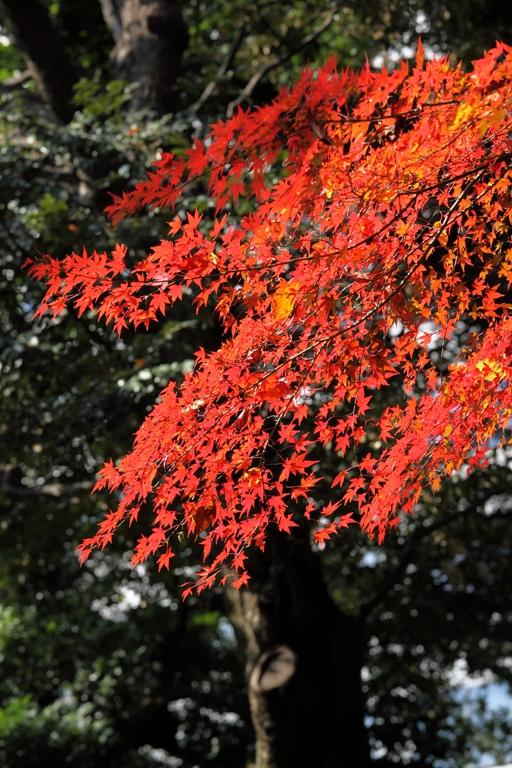 koishikawa_0010fu.jpg